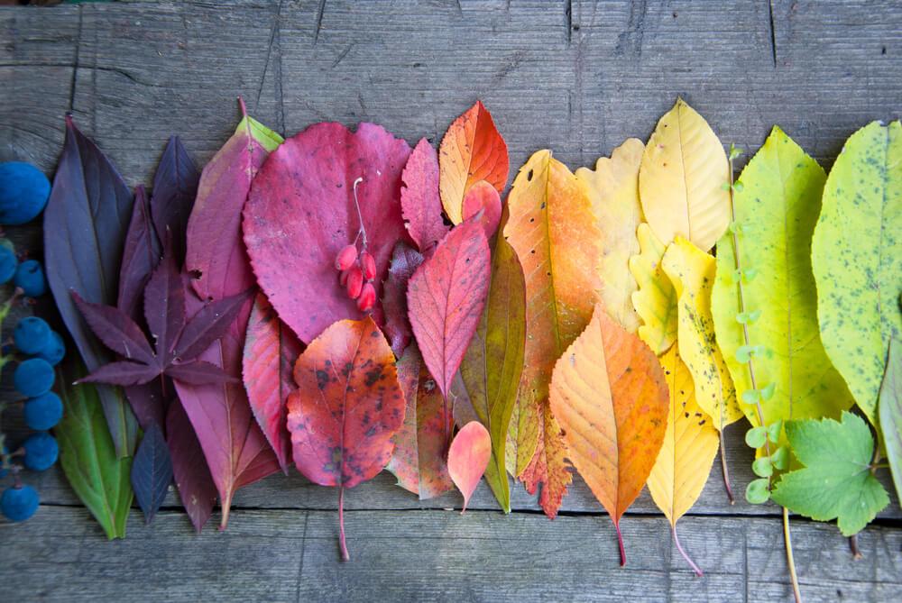 七つのチャクラの色の意味・場所と活用法~チャクラの色が教えてくれること~