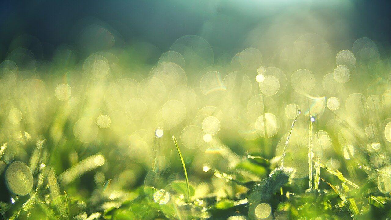 【保存版】人生に生かすアーユルヴェーダのセルフケア~エネルギーの流れを意識して心身を整える方法